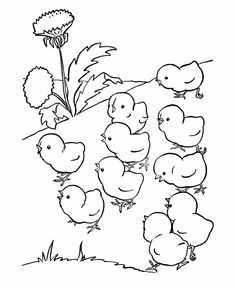 Farm animal chicken coloring page | baby chicks out for a walk