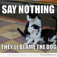Cat memes - [Say nothing] – FunnyMemes.com