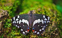 MACRO  wallpaper  | Insectos mariposa macro fotografía Fondos de pantalla | 2560x1600 ...