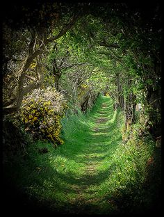 The old road that leads to a ancient stone circle, a beautiful & magical place, Ballynoe, Co.Down, Ireland.    Ballynoe Stone Circle in Co. Down