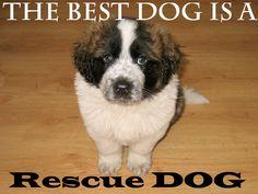 The Best Dog, Is A Rescue Dog. #adoptdontshop #adoptadog