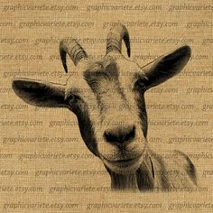 Goat Head Animal Farm Country Digital Collage Sheet Download Burlap Fabric Transfer Iron On Pillows Totes Tea Towels 0323