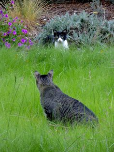 Cats in Gardens: Meadow Cats