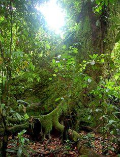 Corcovado national park it Costa Rica! Ecotourism