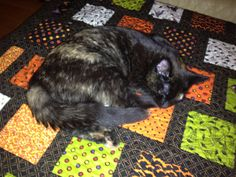 Halloween quilt with cat