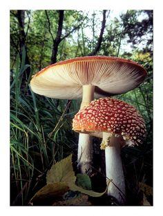 Perfect mushrooms