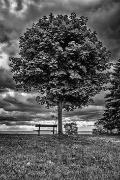 Tree and Bench || Panasonic GX1/Lumix7-14 | 1/160s | f5 | ISO160