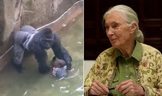 Jane Goodall says Cincinnati Zoo was RIGHT to shoot Harambe the gorilla | Daily Mail Online