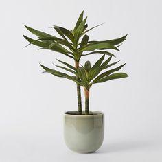 Faux Two Tier Succulent Plant in Ceramic Vase | Target Australia Faux Succulents, Planting Succulents, Ceramic Vase, Ceramics, Plants, Target, Australia, Furniture, Pottery Vase