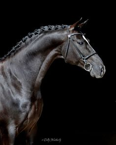 Gorgeous black horse
