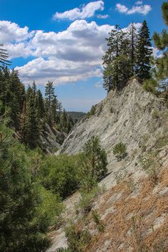 Trees clinging on to life on the edge of the San Andreas Fault.  Take a tour of the fault on our blog at http://www.backroadswest.com/blog/san-andreas-fault-wrightwood/