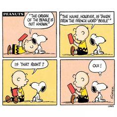 The origin of the Beagle.