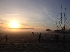 Early morning in the fields, Holland