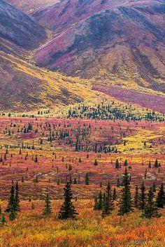 Autumn in Denali National Park, Alaska, USA #TravelDestinationsUsaNationalParks