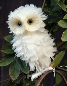 If owls can be considered fluffy...this is one fluffy owl :)