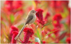 Summer Bird Wallpaper   summer bird wallpaper