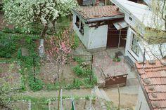 Bulgarian Backyard