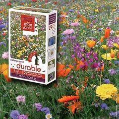 """Jardins Animés : """"Prairie Fleurie"""" : mélange durable de graines (7m2) : une prairie fleurie courte et durable dans le temps. Graines à semer pour voir fleurir un mélange d'espèces annuelles et vivaces d'une hauteur de moins de 50 cm. Ces variétés de fleurs vivaces embelliront vos jardins !"""