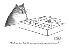 Science Caturday: Slightly Suspicious