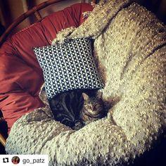 #Repost @seamus_fatbastard With @repostapp ・・・ Orange Is The New Cat.  #seamusu2026   Papasan Chair Users   Pinterest   Papasan Chair And Chairs Online