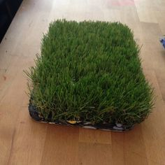 Some beautiful artificial grass - Rama!