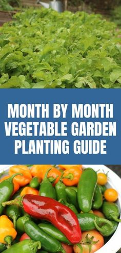 Month by Month Vegetable Garden Planting Guide. Do you ever wonder when in the world to plant your vegetables? I'm here to help with my vegetable garden planting guide. garden planning Month by Month Vegetable Garden Planting Guide Vegetable Planting Guide, Vegetable Garden Planner, Backyard Vegetable Gardens, Potager Garden, Vegetable Garden Design, Planting Vegetables, Organic Vegetables, Growing Vegetables, Veggies