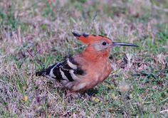 """Summer Birds 