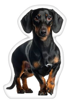 iLeesh Dachshund Black Shaped Pillow *** Awesome dog product. Click the image : Dog Memorials