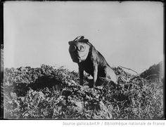 Agence Rol, Front anglo-belge (bureau information) [chien équipé d'un masque à gaz], 1920, BNF/Gallica