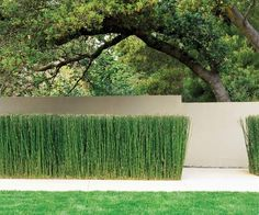 garden decorating horsetail reed lawn privacy fence