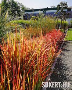"""104 kedvelés, 4 hozzászólás – SD KERT - Spiegel Ákos (@topgarden) Instagram-hozzászólása: """"#gardening #gardendesign #kerttervezés #kerttervező #moderngarden #rocks #andezit #landscape…"""" Land Scape, Modern, Plants, Instagram, Trendy Tree, Plant, Planets"""
