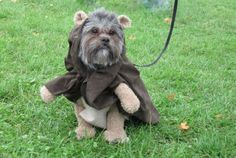 ewok dog! the dog looks majesterial in this outfit. the ears are a nice touch