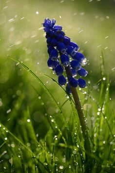 drip drip drop little april showers, what can compare to your beautiful sound?