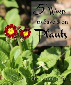 Learn 5 money saving tips for plant shopping. These tips will ensure help you fill up your gardens with good quality plants without breaking the bank.