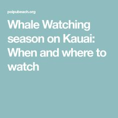 Whale Watching season on Kauai: When and where to watch