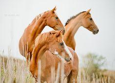 trio | Flickr - Photo Sharing!