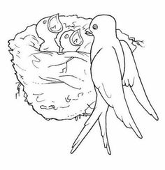 Spring coloring pages for adults and teenagers Spring Coloring Pages, Bird Coloring Pages, Coloring Pages For Kids, Bird Drawings, Cute Drawings, Drawing For Kids, Painting For Kids, Outline Pictures, Beautiful Flower Drawings