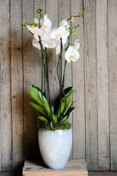 Orchids are some of the most commonly grown houseplants. With proper growing conditions, it isn't difficult to take care of orchid plants. Read here to get some indoor orchid care tips.