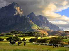 Exploring South Africa: Planning Wine Tasting in Franschhoek