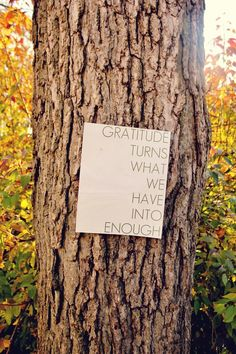 Yes. :: Gratitude turns what we have into enough.