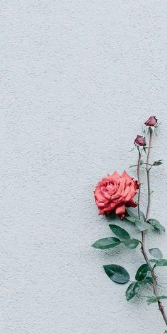 Gambar Bunga Cantik Dan Indah Latar Belakang Wallpaper Poster Bunga Gambar Bunga