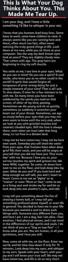 This Is What Your Dog Thinks About You. This Made Me Tear Up. dogs dog story pets interesting facts stories heart warming i love my dog I Love Dogs, Puppy Love, Cute Dogs, Animals And Pets, Cute Animals, Pet Loss Grief, Dog Poems, Tier Fotos, Animal Quotes