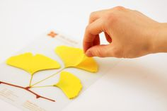 NEED.    This is beautiful.  Ginko is said to improve memory function- and what better to help you remember things than to write down things you want to remember on ginko-shaped post-its.  I mean, perfect.
