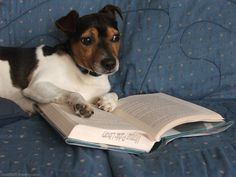 Morris knows it might not lead to an easy career path, but he can't help it. He wants to be an English major. | 21 Dogs That Have Realized Their Life's Purpose