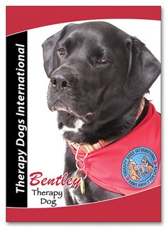 Trading Cards For Therapy Dogs Choose Your Content And Colors