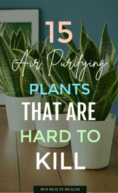 The best air purifying plants that are super low maintenance and hard to kill. According to NASA, these types of houseplants ( ex: gerbera daises, snake plants, peace lily, boston ferns, and more) are great for indoors to clean the air. Place anywhere inside your home as decor like bedrooms, bathroom and kitchen or at the office. Many need only low light and are also pet safe. Outdoor Box, Best Air Purifying Plants, Types Of Houseplants, Wall Hanging Shelves, Boston Ferns, Diy Storage Boxes, Diy Projects Cans, Garden Lanterns, Peace Lily