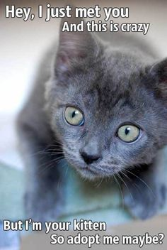 """Hey, I just met you and this is crazy, but I'm your kitten, so #adopt me maybe?"""