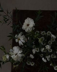 Dark Feeds, Aesthetic Editing Apps, Nature Plants, Homescreen, Aesthetic Wallpapers, Green And Grey, Bloom, Demons, Aesthetics