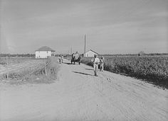 A wagon load of cotton coming out of the field in the evening. Mileston Plantation, Mississippi Delta, Mississippi, (Photographic negative by Marion Post Wolcott. Library of Congress. Mississippi Delta, Dust Bowl, William Eggleston, July 28, Library Of Congress, Us Images, Masters, Fields, Depression