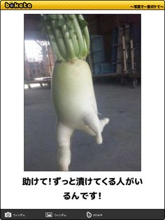How a Japanese Radish Became an Internet Hero Weird Plants, Cactus Plants, Weird Trees, Food Humor, Funny Food, Illustrations And Posters, Fruits And Vegetables, Funny Photos, Photo Book